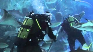 аквариум флория