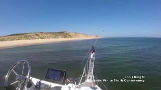 White Shark takes Seal off Wellfleet, MA (8/2/18)