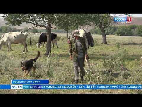 Реконструкция животноводческих помещений в Бугурусланском районе