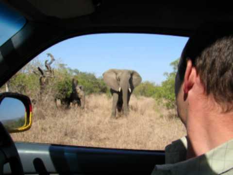 wildlife safari special.mp4 2.mp4