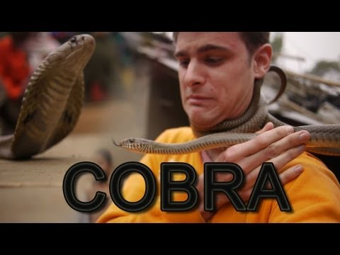 G.I. Jory: The Rise of Cobra