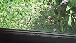 Birdy tapping on my window