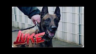 Luke testet Polizeihunde