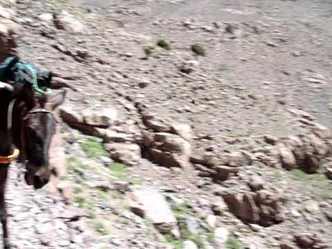 runaway pack mule in morocco