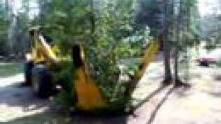 Transplanting Trees due to the Emerald Ash Borer - YouTube