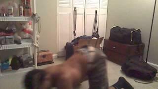 """Chris Brown """"SEX"""" grind"""