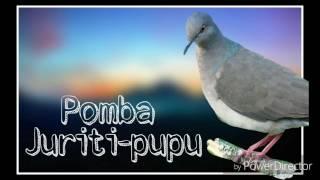 Canto Pomba Juriti-Pupu
