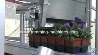Trimming machine for trays venti vacuum nursery trimmer  trays- propagation trays, flats, packs