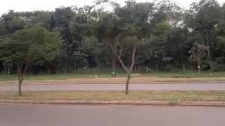sons estranhos vindo da mata.. asustador.. / Strange sounds of the forest - HD 720