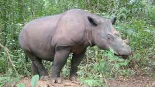 Mark Carwardine & Martina Navratilova introduce Save the Rhino International