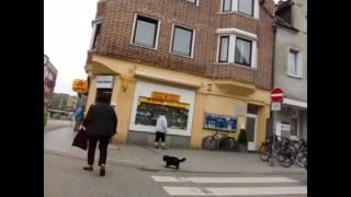 Mc.Terestru,Die Sonne - Tutti Frutti (Official video)