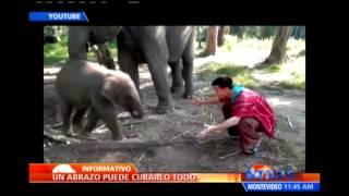Elefante bebé ofrece abrazos en Tailandia