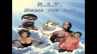 R.I.P. Meow the 39 pound cat - A tribute song