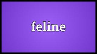 Feline Meaning