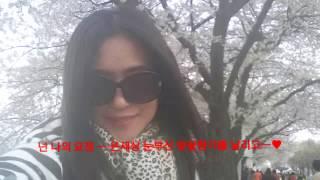 벚꽃비 ㅡ 하트벚꽃으로 다시 피어나다! ♥_♥ ... 혜성.