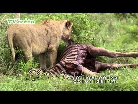 LibraryLooks – Kruger park, South Africa #01