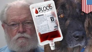 Zombie dog: Texas vet Millard Tierce harvested healthy dog's blood for transfusions
