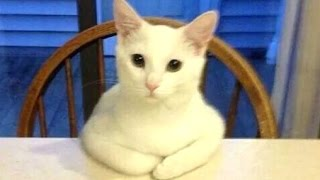 Funny Cats Acting Like Humans
