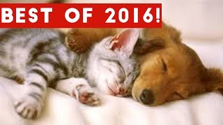 The Best Funny Pet & Animal Videos of 2016 Weekly Compilation | Funny Pet Videos