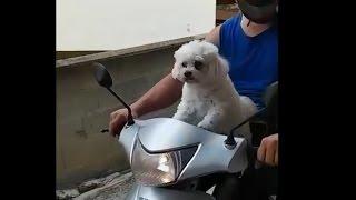 O cachorrinho que adora andar de moto! | Vitavet Vídeos