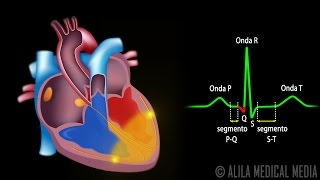 Sistema de Condução do Coração e ECG, Animação. Alila Medical Media Português.