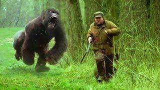 Animals That Took REVENGE On Humans!