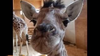 Cheers to Animal Adventure Park - a Music Tribute (Cheers Parody)