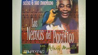 Los Nemus Del Pacifico ''Tempestad'' Con Alexis Murillo.