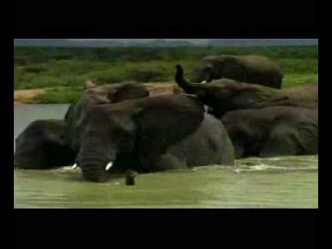 Camp Jabulani, Luxury Elephant back Safaris in Africa