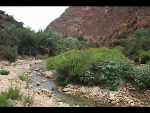 Morocco's flora and fauna