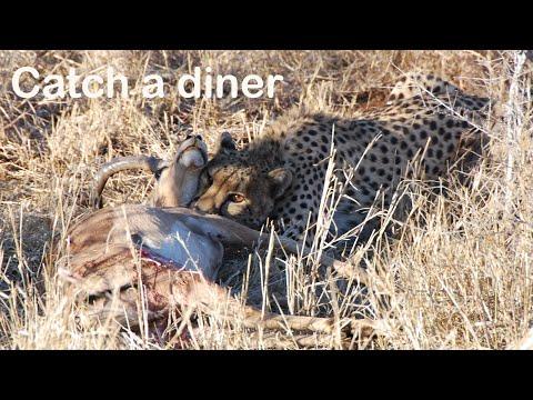 Catch a diner
