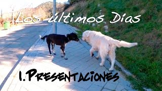 1. Presentaciones caninas - Los últimos días