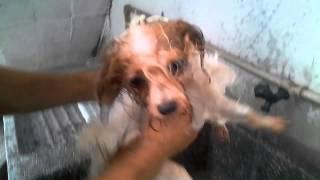 Lava Dog