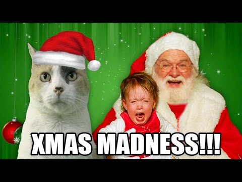 Creationist Cat Christmas MADNESS!
