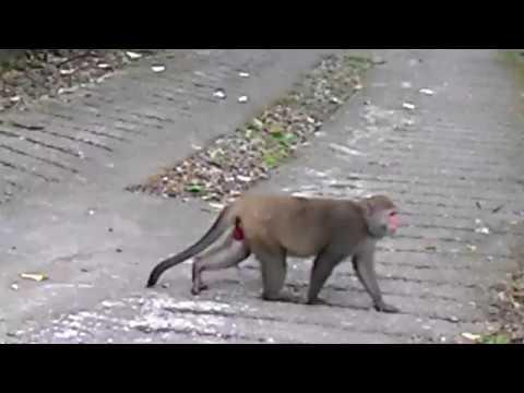 花蓮縣中正國小403佐倉步道健行~給猴子看2 - YouTube