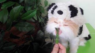 Halloween Panda Kitty