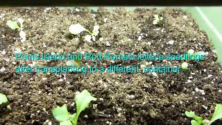Seed Starting Tips  -  Not All Natural Seed Starting Materials Are Ideal For Your Seedlings
