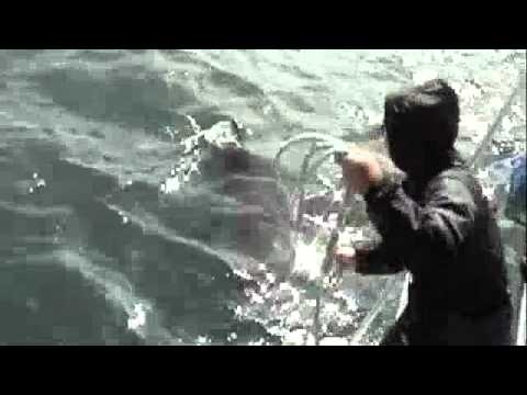 Great White Shark Dive – South Africa
