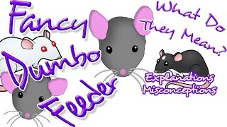 Fancy, Dumbo, & Feeder Rats! What Are They?? | Rat Chat