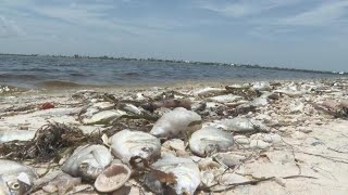 """""""Red tide"""" toxic algae outbreak in Florida prompts health concerns"""