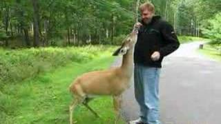 Hert gedraagt zich als hond
