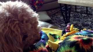 My dogs reaction to desert rain frog roar