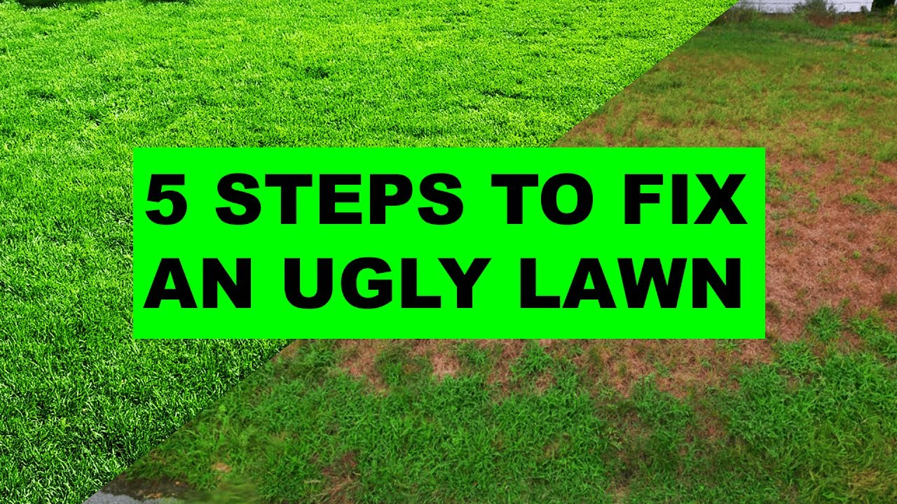 how to fix an ugly lawn