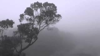 The Joy of Nature - O Sopro do Vento Norte