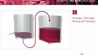 Vinification des vins rouges de Bourgogne / Vinification of red Bourgogne wines