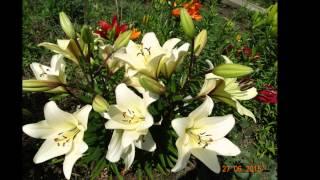"""Iorcani - """"Floriile de vară""""  - ediția 2015."""