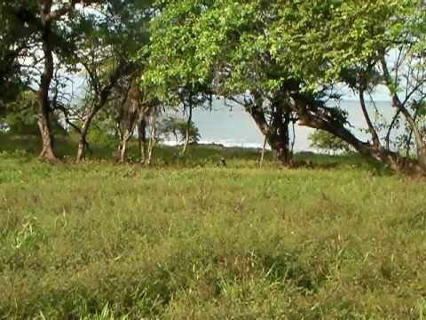 Rocky Point, Nicaragua Real Estate Development, Lot 14