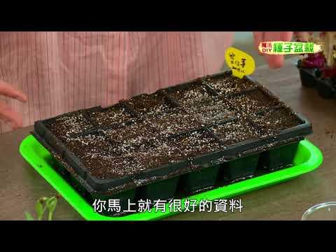 種子盆栽DIY教學 - 穴播法 - YouTube