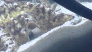 ウチに棲むミギー[寄生獣]