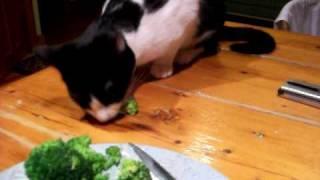 Panda Bear Eats Broccoli..and not the meat...